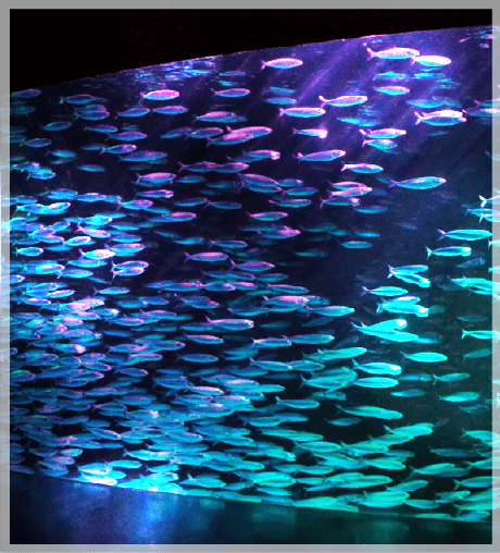 沙丁魚展 銀河水槽