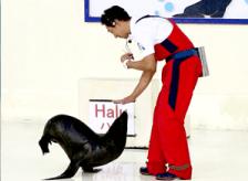 海獅及海狗表演秀保證讓您一看就笑!!